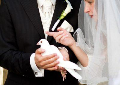 svadobne holuby,