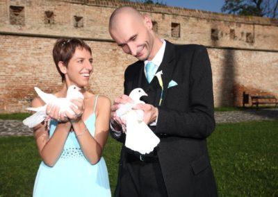 svadobne holubice
