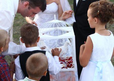 biele holuby na svadbu
