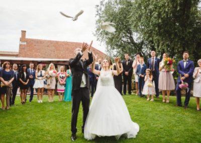 biele holubky